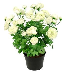 Bilde av Mr Plant Ranuncel 30cm