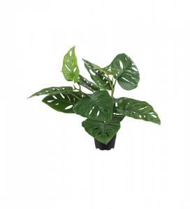 Bilde av Mr plant Monstera 35 cm