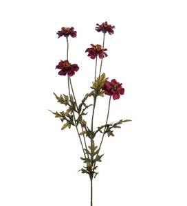 Bilde av Mr Plant Coreopsis 75cm