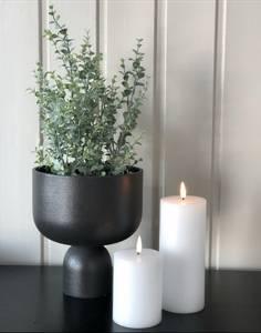 Bilde av Mr Plant Eucalyptus i potte