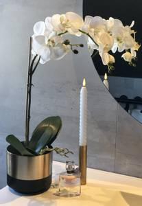 Bilde av Mr plant Phalaenopsis 60cm