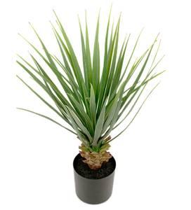 Bilde av Mr plant Yucca palme 58cm