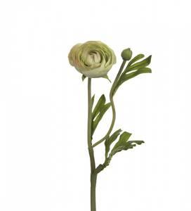 Bilde av Mr. Plant ranukel rosa og