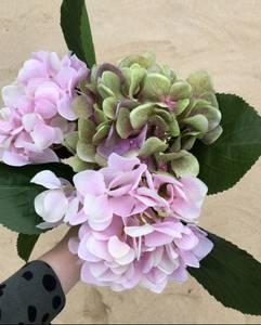 Bilde av Mr Plant Hortensia lys rosa