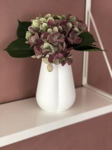 Bilde av Mr Plant Hortensia mørk lilla