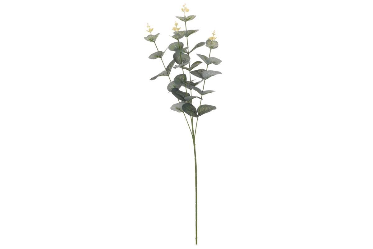 Eucalyptus gren, 65 cm