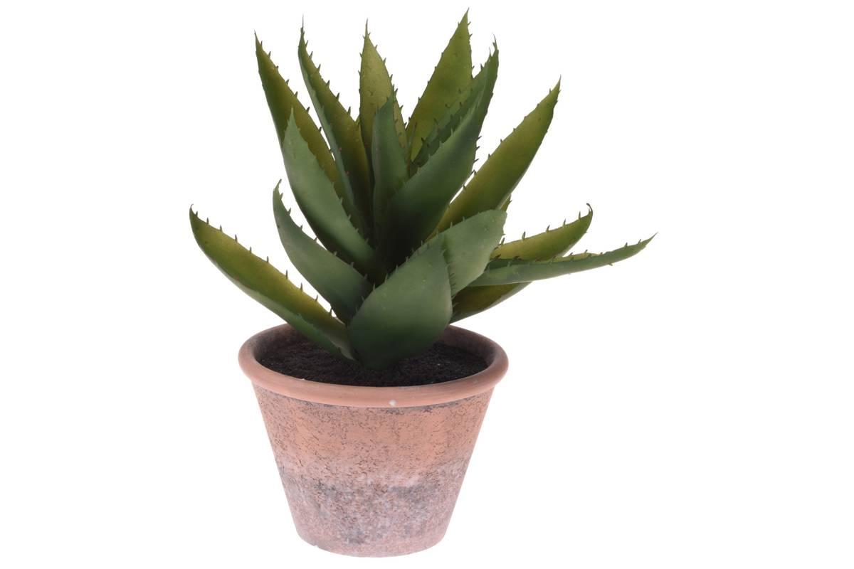 Kaktus i potte, 30 cm