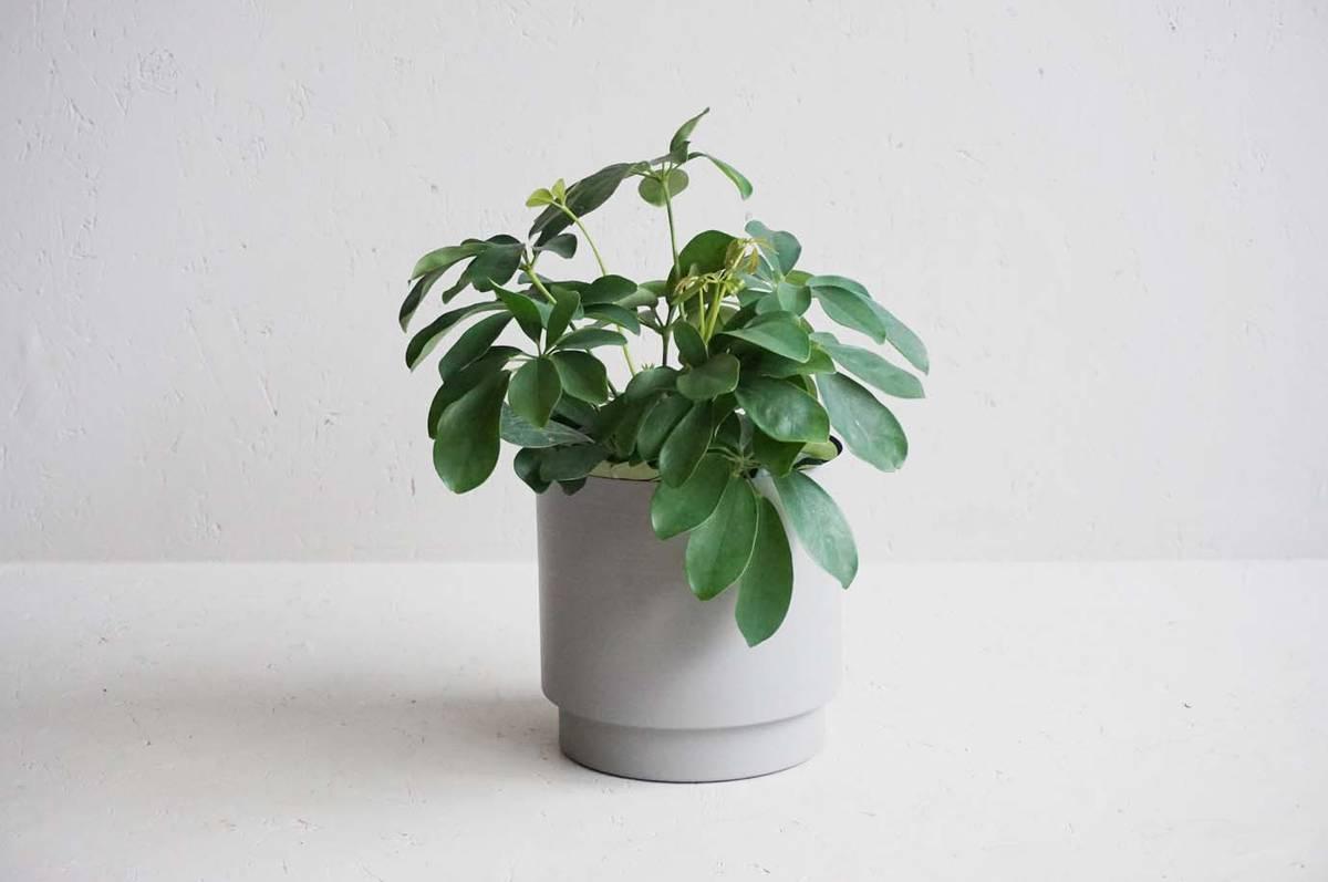 Blomsterpotte, 18 cm, grå