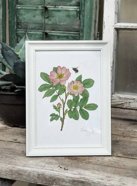 Bilde av Kunsttrykk med nyperose og humle