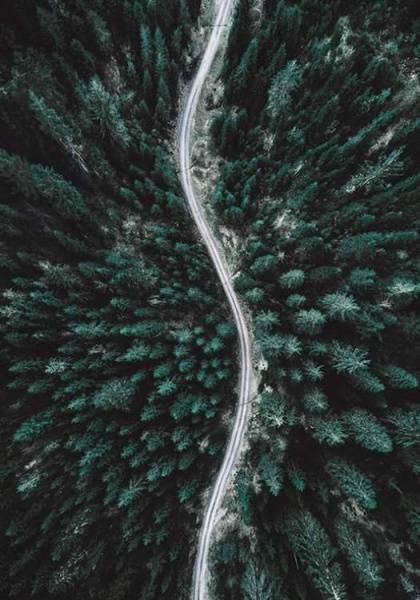 Bilde av FOREST AERIAL POSTER