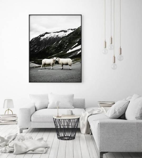 Bilde av STRAY SHEEP PLAKAT