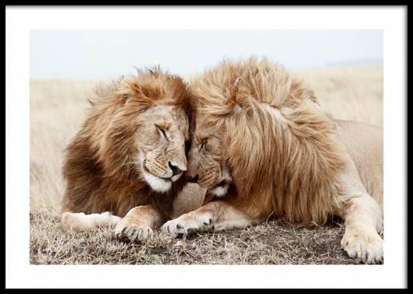 Bilde av LION BROTHERS POSTER