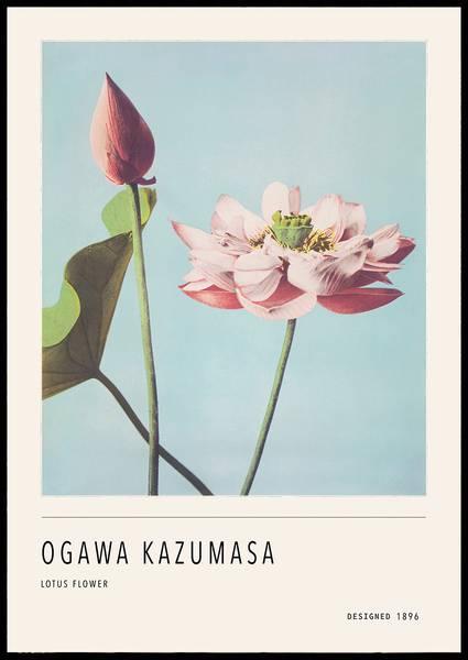 Bilde av O. Kazumasa Lotus flower plakat