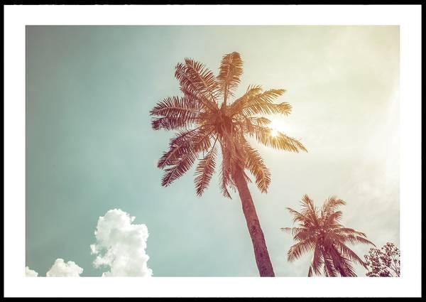 Bilde av SUMMER PALM PLAKAT