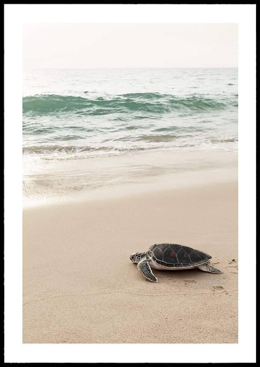 TURTLE BEACH PLAKAT