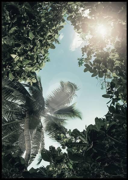 Bilde av Summer palms plakat