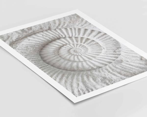 Bilde av Ammonite Fossil plakat