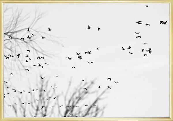 Bilde av FLYING BIRDS POSTER