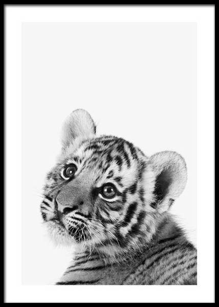 Bilde av BABY TIGER POSTER