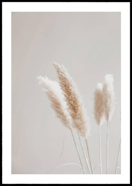 Bilde av Pampas grass plakat