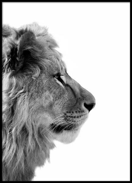 Bilde av LION FROM SIDE POSTER