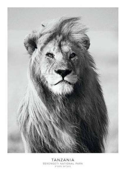 Bilde av LION POSTER