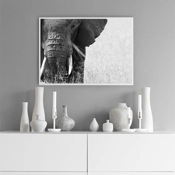 Bilde av CLOSEUP ELEPHANT POSTER