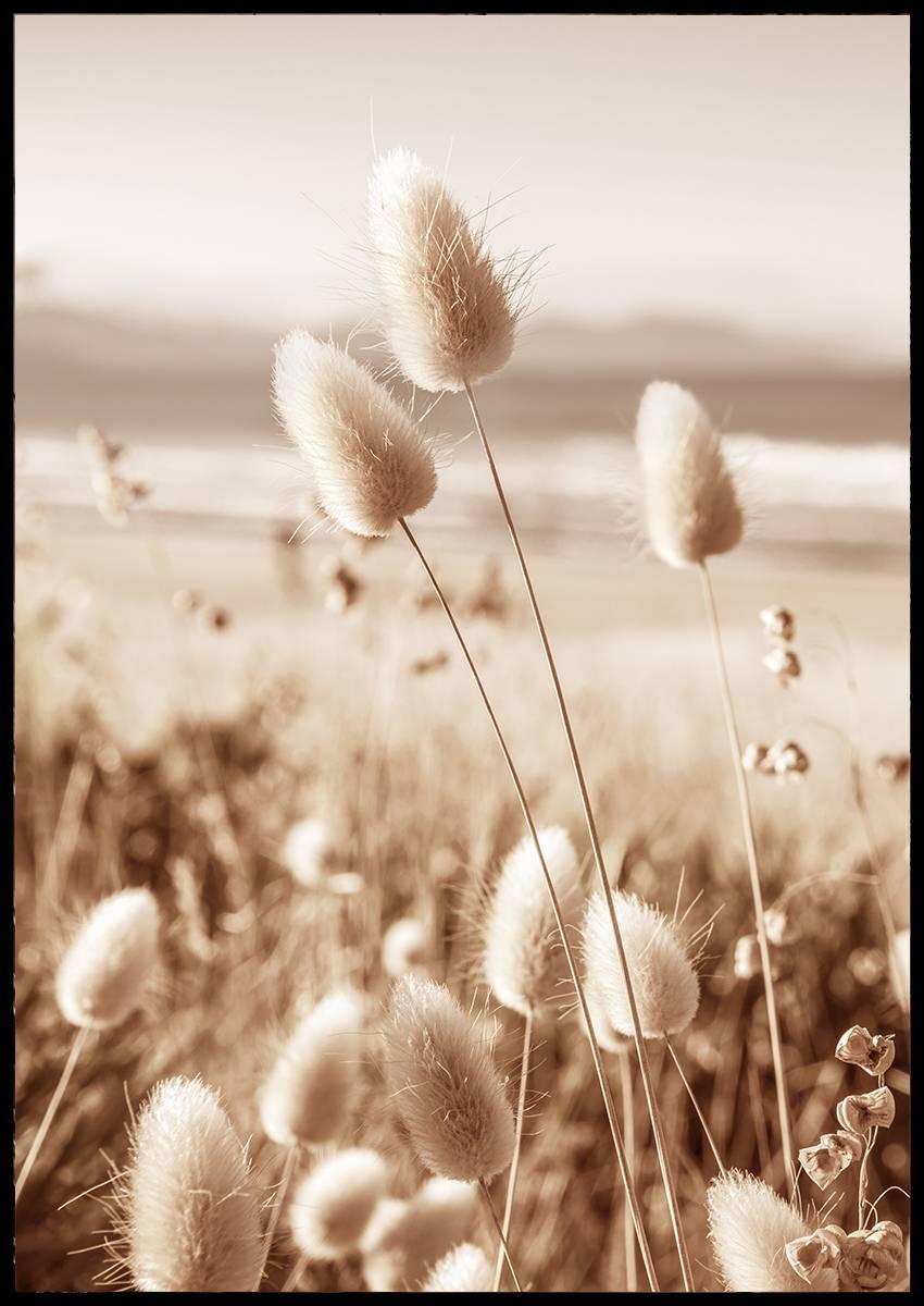 Reeds on the beach plakat