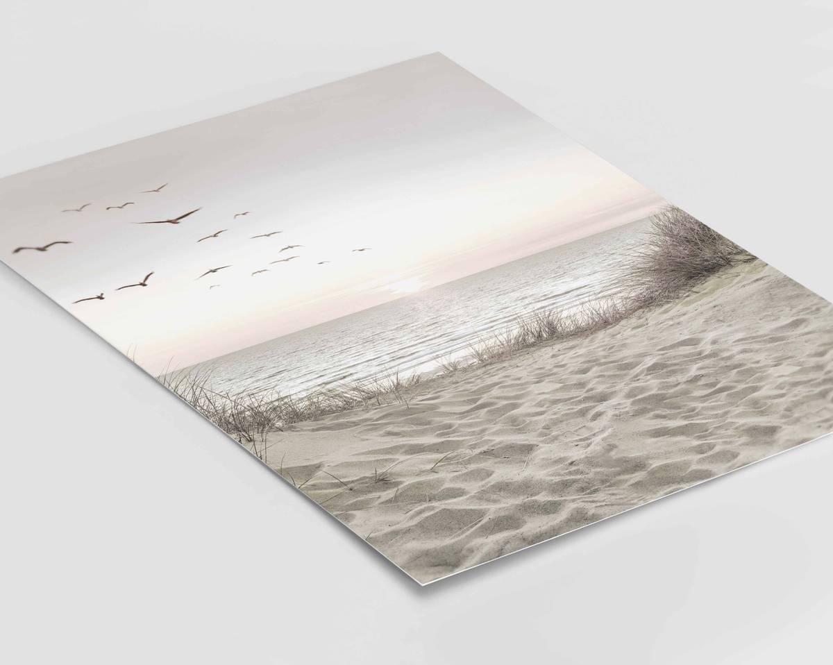 Birds on the beach plakat