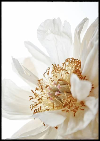 Bilde av Flower closeup plakat