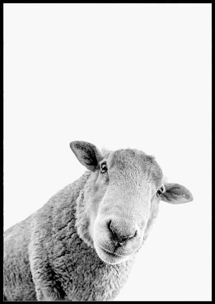 Bilde av HELLO SHEEP PLAKAT