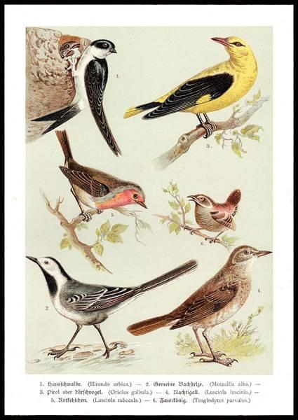 Bilde av VINTAGE BIRDS PLAKAT