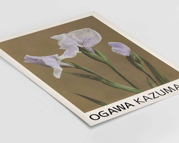 Bilde av Kazumasa irises plakat