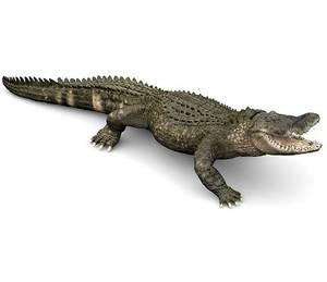 Bilde av PAPO Miniatyrfigur Alligator