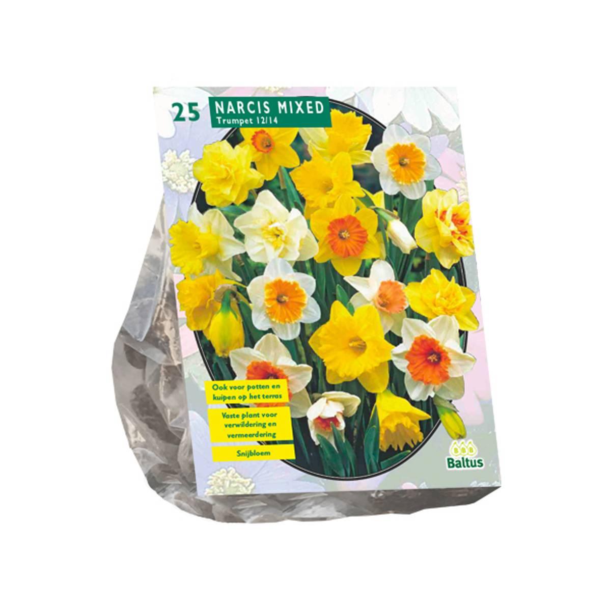 Narcis 'Trompet, Mix' - 25 stk. blomsterløk av påskelilje