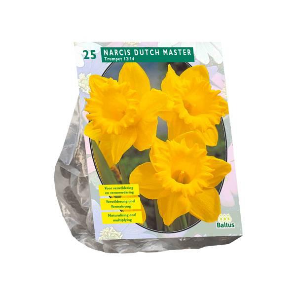 Bilde av Narcis 'Trompet, Gul' - 25stk blomsterløk av