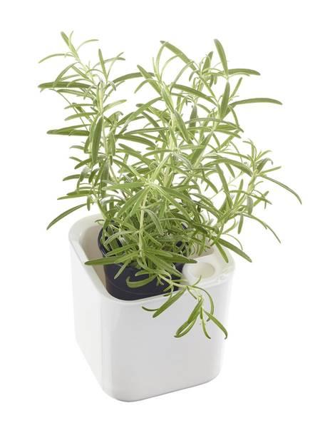 Bilde av Eden urtekrukke, hvit 12cm