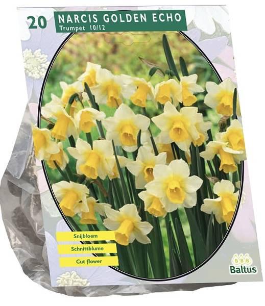 Bilde av Narcis 'Golden Echo. 20 stk. blomsterløk av