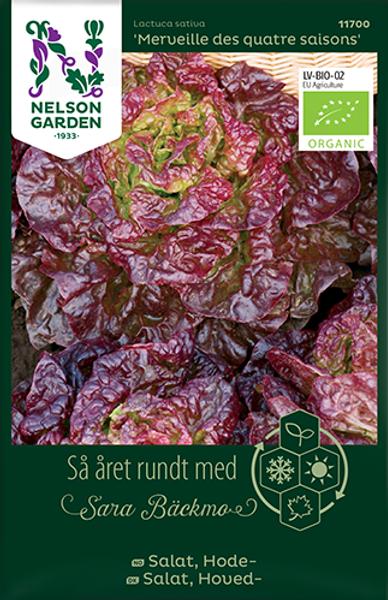 Bilde av Salat, Hode- 'Merveille des quatre saisons'