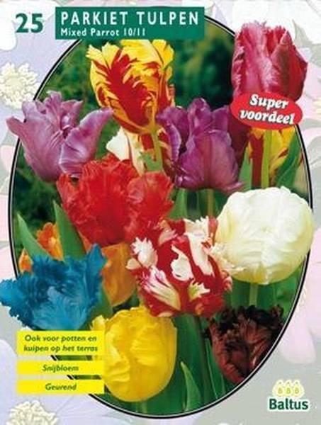 Bilde av Tulipa Parkiet Mix, Løk størrelse: 10/11 . Antall