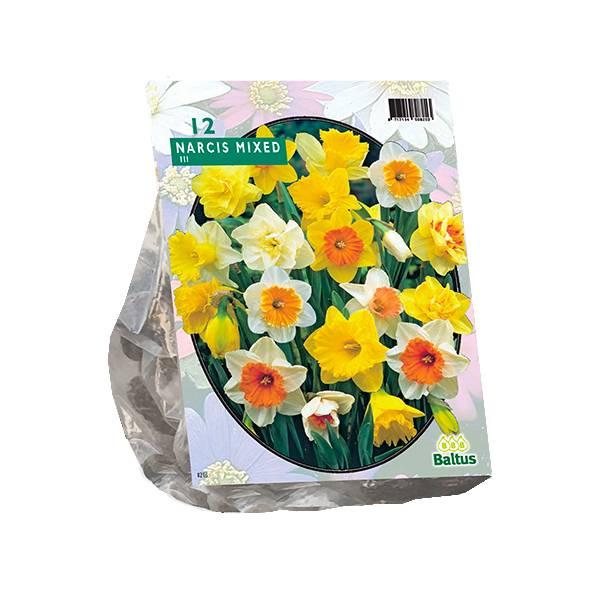 Bilde av Narcis 'Trompet, Mix' - 12 stk. blomsterløk av