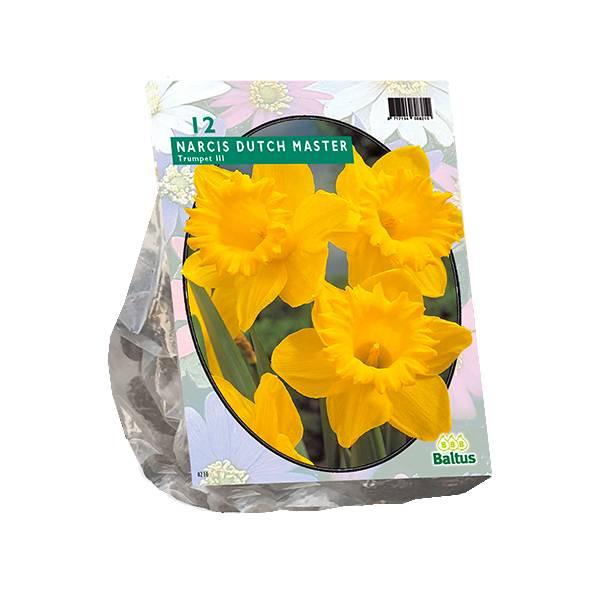 Bilde av Narcis  'Trompet, Geel' - 12 stk. blomsterløk av