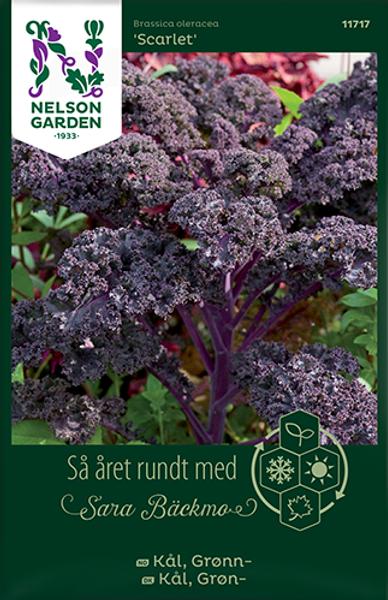 Bilde av Kål, Grønn- 'Scarlet'