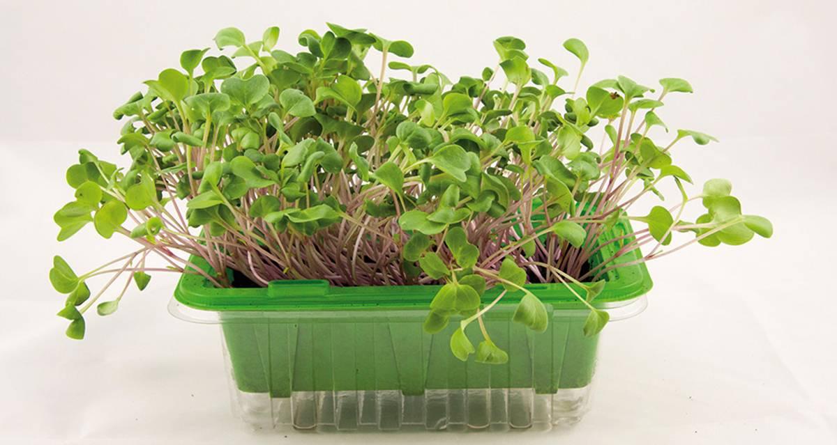 Micro Leaf Bladreddik