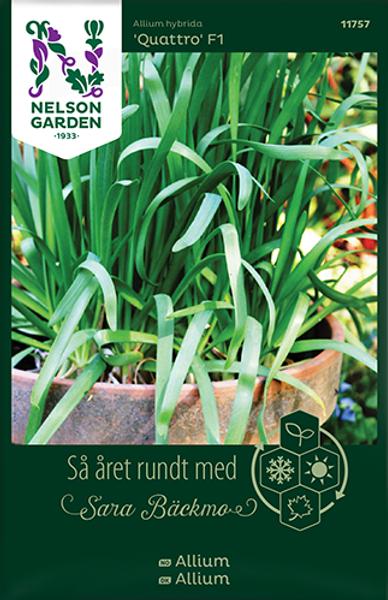 Bilde av Allium 'Quattro' F1