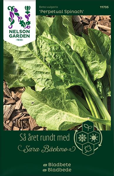 Bilde av Bladbete 'Perpetual Spinach'