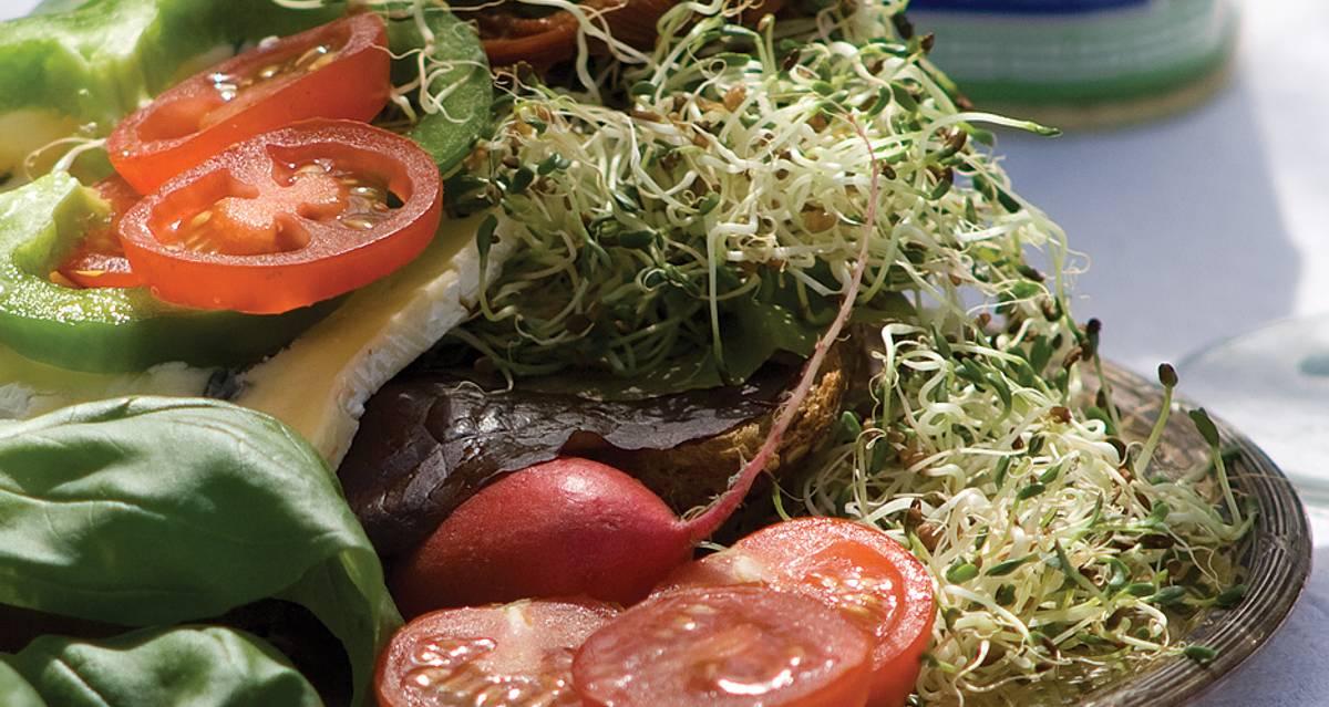 Alfalfa Organnic