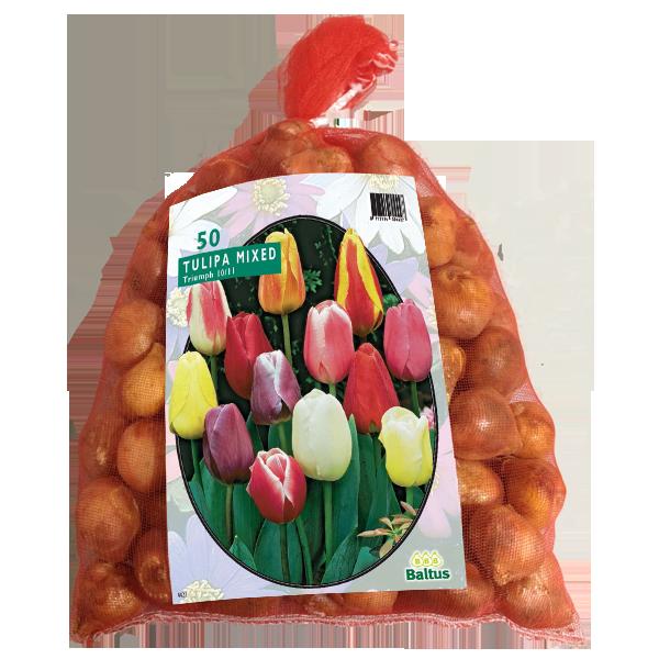Bilde av Tulipa Darwin Mix, Antall løk 50