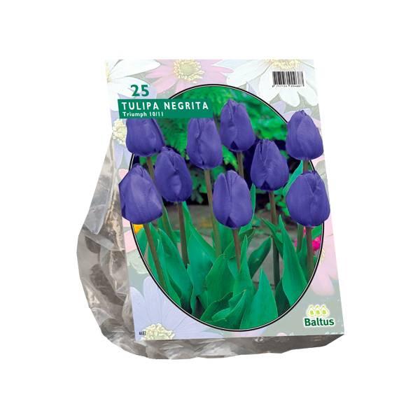 Bilde av Tulipa Negrita, Triumph. Løk størrelse: 10/11.