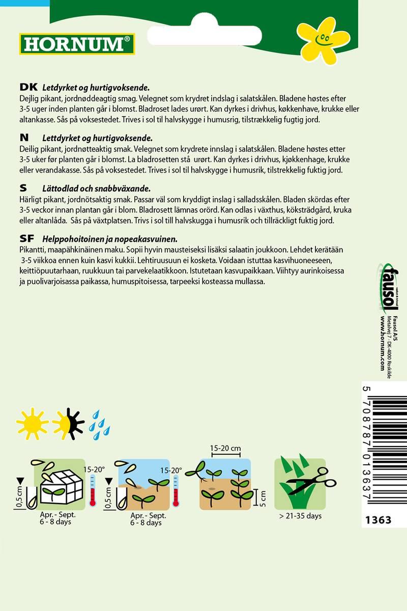 Salatsennep, RucolaRocket(Lat: Eruca sativa)